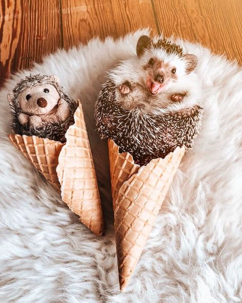 Audree The Bengal Cat And Herbee The Hedgehog Go On Adorable Adventures Around The World