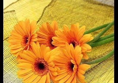 صور ورد اصفر رمزيات باقة ورد صفراء خلفيات ورد اصفر طبيعي مجلة رجيم Beautiful Flowers Wallpapers Beautiful Flowers Photos Most Beautiful Flowers