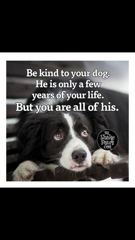 Pin By Shana Copeland On Adorable Creatures Dog Quotes Love Dog
