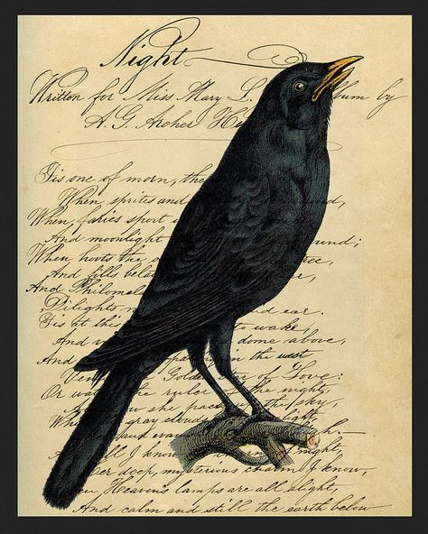 I put this Halloween printable together with two great images from the Graphics Fairy - a crow and some vintage writing ephemera . Retro Halloween, Image Halloween, Halloween Prints, Halloween Pictures, Spooky Halloween, Holidays Halloween, Halloween Ideas, Halloween Costumes, Halloween Raven