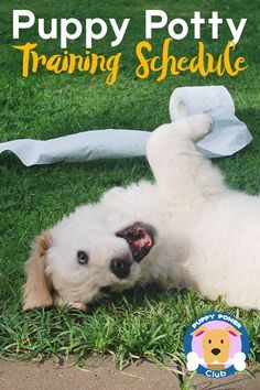 Puppy training schedule week by week  If you're trying to