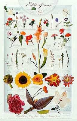 Edible Flowers botanical print
