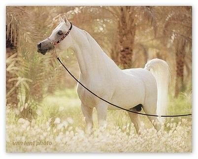 Cheval Blanc Wallpaper Fond D Ecran Photo Schonste Pferde Pferde Bilder Weisse Pferde