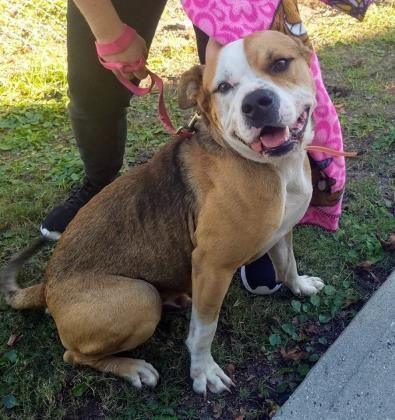 Adopt Milo On Dog Adoption Help Homeless Pets Homeless Pets