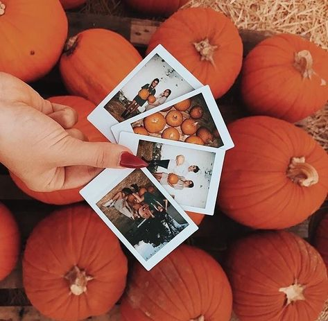 pumpkin, autumn, and fall image Best Pins ? Autumn Cozy, Fall Winter, Autumn Photography, Photography Ideas, Photography Lighting, Photography Hashtags, Fashion Photography, Photography Backgrounds, Photography Challenge