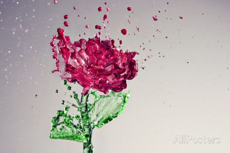 Splash of Rose Photographic Print by Yugus at AllPosters.com
