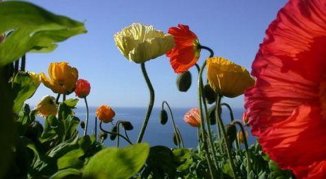 47 idee su Primavera | paesaggi, natura, natura meravigliosa
