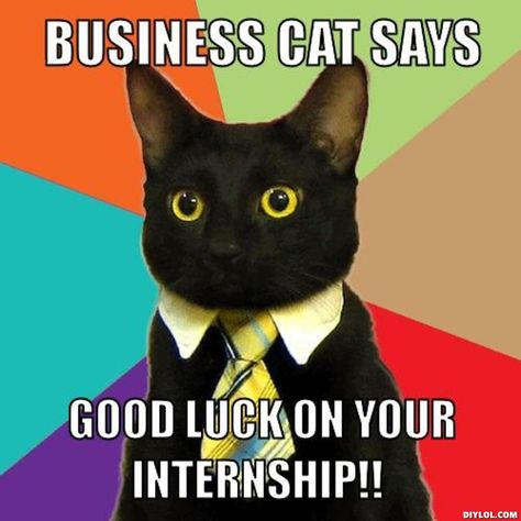 Internship meme Business cat says good luck on your internship - when to quit your internship
