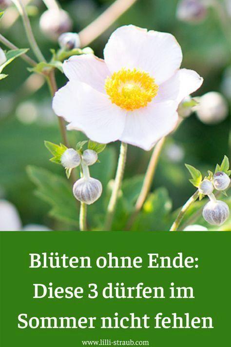 Du Suchst Pflegeleichte Pflanzen Die Im Sommer Wenig Wasser Brauchen Die Sonne Modern Design Pflegeleichte Pflanzen Sommerpflanzen Pflegeleichter Garten