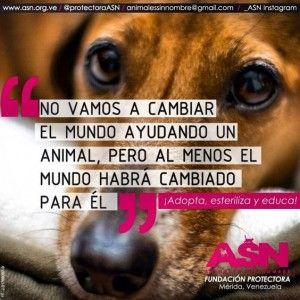 Frases De Amor A Los Perros Adopta Un Perro Perros