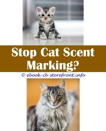 9 Glorious Tips My Male Cat Started Spraying On Me Hartz Ultraguard Flea And Tick Spray For Cats Safe No Go Spray For Cats Cant Cats Cat Urine Smells Male Cat Spraying