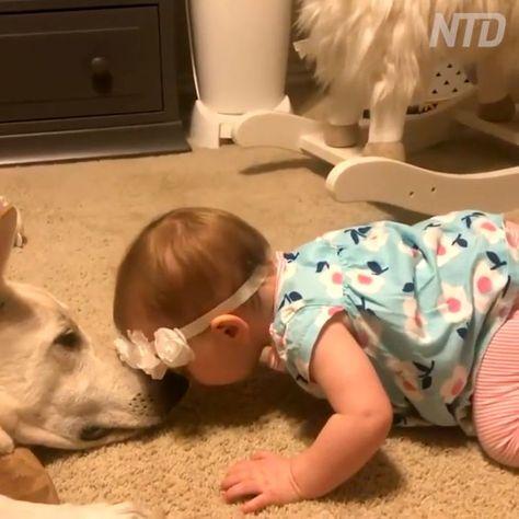 Little baby girl found her first pet friend,  #baby #babypicturesvideos #friend #girl #pet