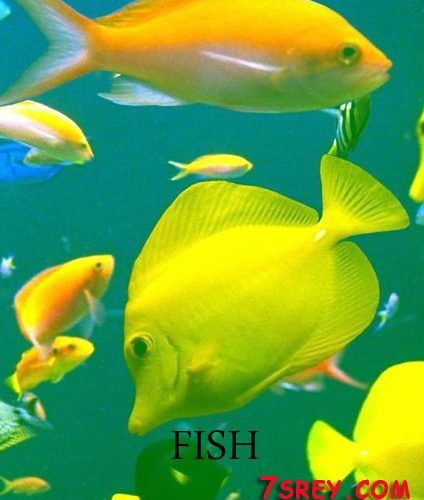 نتائج البحث عن صور عالية الجودة Fish Pet Fish Pets
