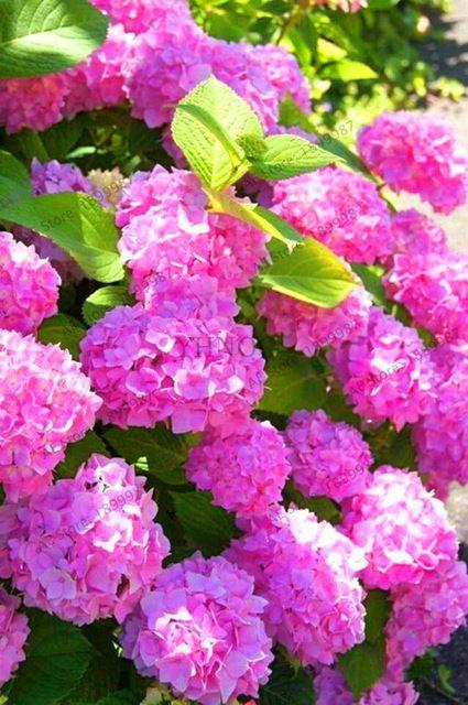 Pin On Dzialka Kwiaty4 Angela Tea Store