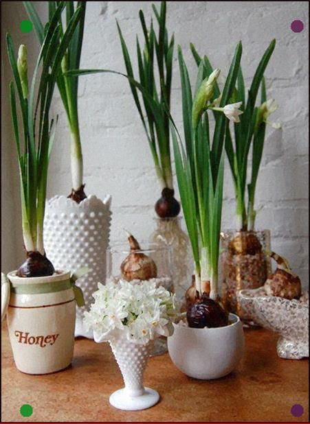 Paperwhites And Milk Glass Love Bulb Flowers Paperwhites Plants