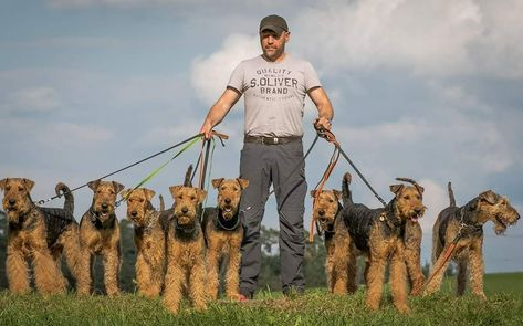 AIREDALE TERRIER Dogs From #germany🇩🇪, Michael Janz _________________________________ from the left: Manolo Isetta = Manolos Mother Moneypenny = Manolos sister and daughter of Isetta Penny Lane = daughter of Isetta, Sister of Manolo and Moneypenny from other Male.. Greta Garbo = Aunt of Isetta Ferrari, Motz = Son of Ferrari