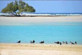 10201815162849424 الطيور المهاجرة فى قلعان Beach Outdoor Egypt