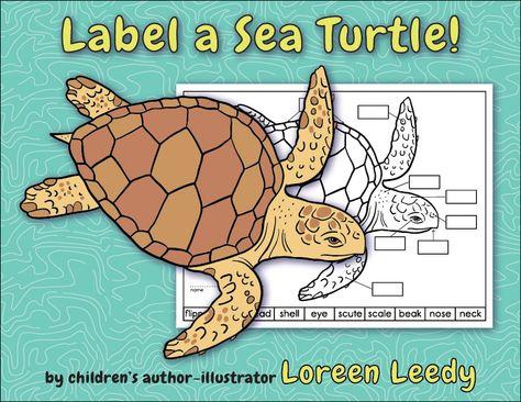 3f37b81c8bf6e43a97a8ac5929fa3ef8 ocean unit sea turtles label a sea turtle! {body parts diagram}