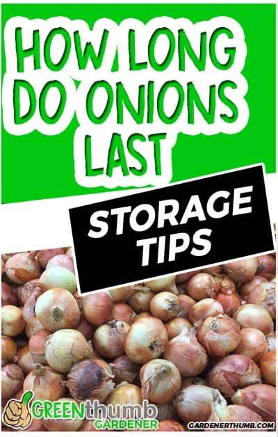 Most People Ask How Long Do Onions Last In The Food Pantry We Give You The Details On How To Store Onions And Other Ideas For Long Term Fall Vegetables Onion