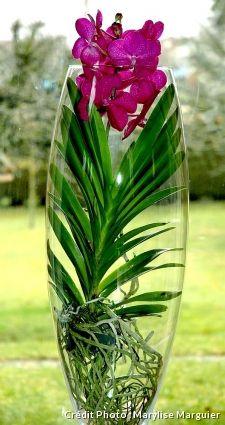 Orchidee Vanda Et Ascocenda 3 Methodes D Entretien Et De Culture