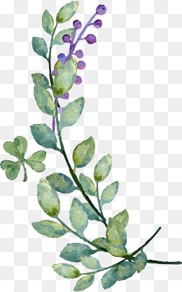Watercolor Leaves Blueberry Decoration Vector Watercolor Leaves