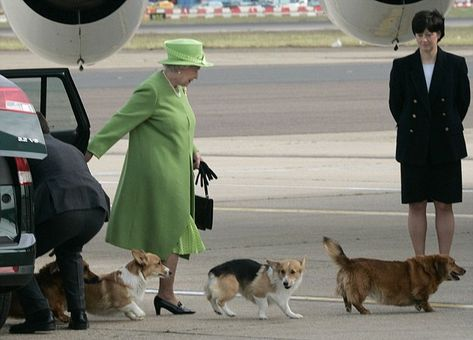 The Queen's Corgis Holly and Willow, pictured closest to Her Majesty, have been a regular sight during her rule but she has ruled out introducing any new dogs