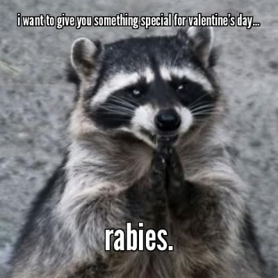 I Want To Give You Something Special For Valentine S Day Rabies Meme Something Funny Animal Memes Animals Animal Memes