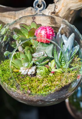 Epingle Sur Comment Faire Un Terrarium