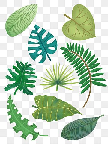 9 Green Palm Leaves Design Vector Banana Leaf Watercolor Painted Png Transparent Clipart Image And Psd File For Free Download Palm Leaf Design Leaf Design Banana Leaf