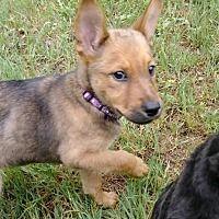 Pin By Rubilee Dykes On Adoptable Pets German Shepherd Dogs