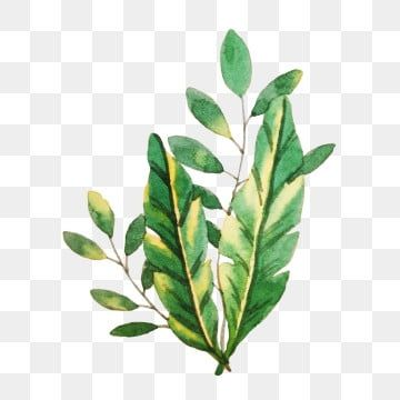 Watercolor Hand Painted Leaves S Plant Leaves Watercolor Png And Vector With Transparent Background For Free Download Watercolor Flower Background Plant Illustration Flower Painting