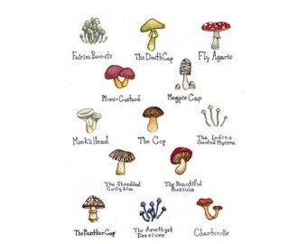 Items similar to Mushrooms Field Guide Art Print / Watercolor Painting / Wall Art / Nature Print on Etsy