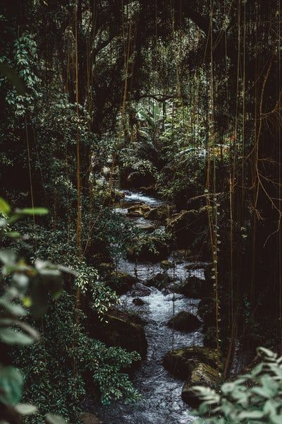 Water Flowing In Forest Jungle Pictures Nature Iphone Wallpaper Jungle Wallpaper