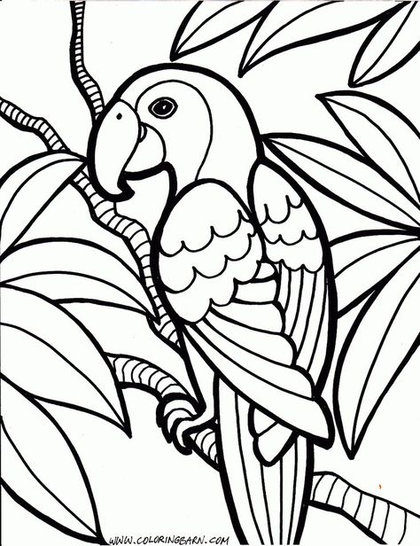 Parrot Coloring Pages Bird Coloring Pages Jungle Coloring Pages