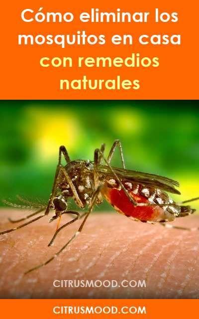 Como Eliminar Los Mosquitos En Casa Con Remedios Naturales Mosquitos Moscas Repelente Eliminar Natural Sintoxicos Mosquito Anti Mosquito Vicks Vaporub
