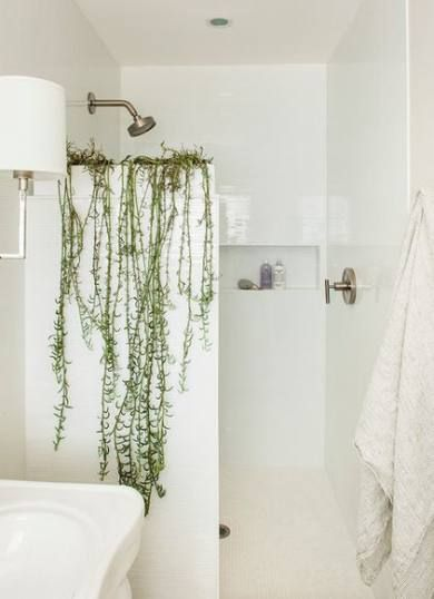 61 Best Ideas Plants Bathroom Spider Plants Bathroom Plants