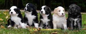 Terrific No Cost Bernese Mountain Dogs Golden Retriever Suggestions Being Fully Terrific In 2020 Bernese Mountain Dog Poodle Mountain Dogs Dogs Golden Retriever