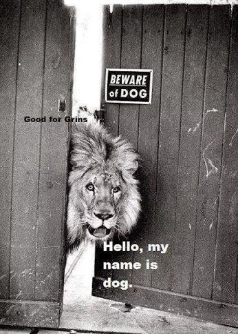 Meet my dog, Dog.