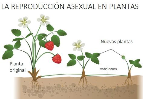 Las Mejores 17 Ideas De Las Plantas Partes Y Características Partes De La Planta Plantas Partes De La Flor