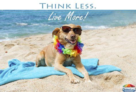 Think Less Live More Thinkless Livemore Sandbridge Vabeach Siebert Beach Dogonbeach Siebert Realty The Be Dog Beach Dog Friends Dog Friendly Beach