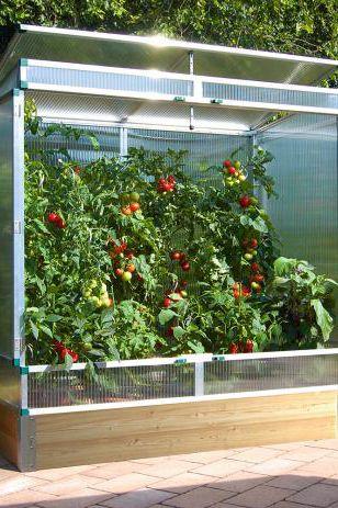 Kleine Tomatenhauser Bild 15 In 2020 Gewachshaus Pflanzen Tomaten Haus Bauen Tomaten Haus