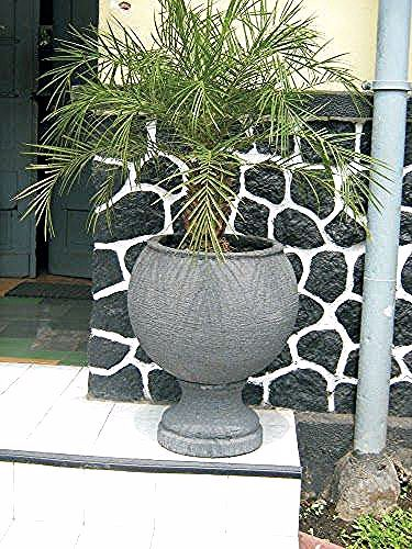 Gambar Pot Bunga Yg Bagus Pot Ukuran Sedang Hiasan Taman Rumah The Beauty Of Oxalis Triangularis Steemit 11 Desain Pot Bunga Minimalis Yang Bagus Car In 2020 Plants