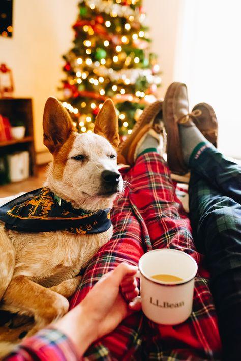 #llbean #beanoutsider #christmas #christmasdecor #christmasvibes #plaidchristmas #flannel #llbeanpets