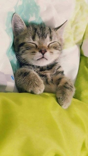 Pin By Monique H On Kittens In 2020 With Images Baby Cats Cute Cats And Kittens Cat Sleeping