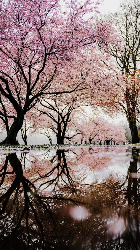 New Wallpaper Vintage Girly Wallpapers 21 Ideas Nature Photography Trees Cherry Blossom Wallpaper Nature Photography