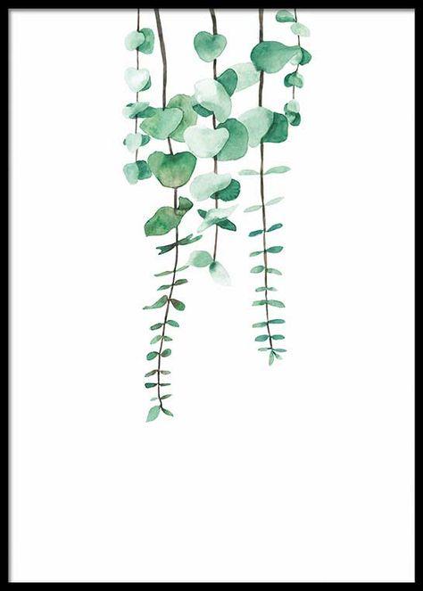 Hanging Eucalyptus Plant Poster En 2019 Dessin Plante