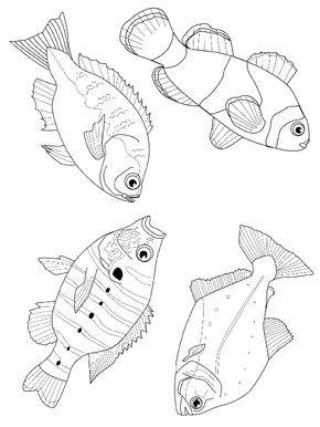 Fisch Malvorlagen Malvorlagen Tiere Lustige Malvorlagen Und
