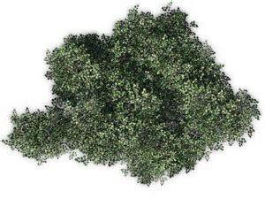 Bildergebnis Fur Olive Tree Top View