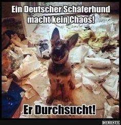 Ein Deutscher Schäferhund macht kein Chaos! | DEBESTE.de, Lustige Bilder, Sprü...  #Bilder #Chaos #DEBESTEde #Deutscher #ein #kein #lustige #macht #Schäferhund #Sprü #Gatos Blog #Gatos Bonitos #Gatos Graciosos 🐱