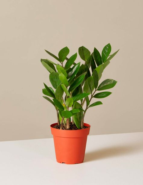 The 10 Best Indoor Plants for Every Kind of Person • Gear Patrol